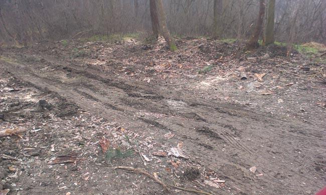 Locul de unde copacii taiati de pe dealul Banta sunt urcati in camioane